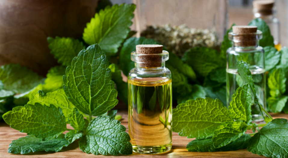 Effective Method To Get Rid Of Aging Skin With Lemon Balm Leaf Tea!!
